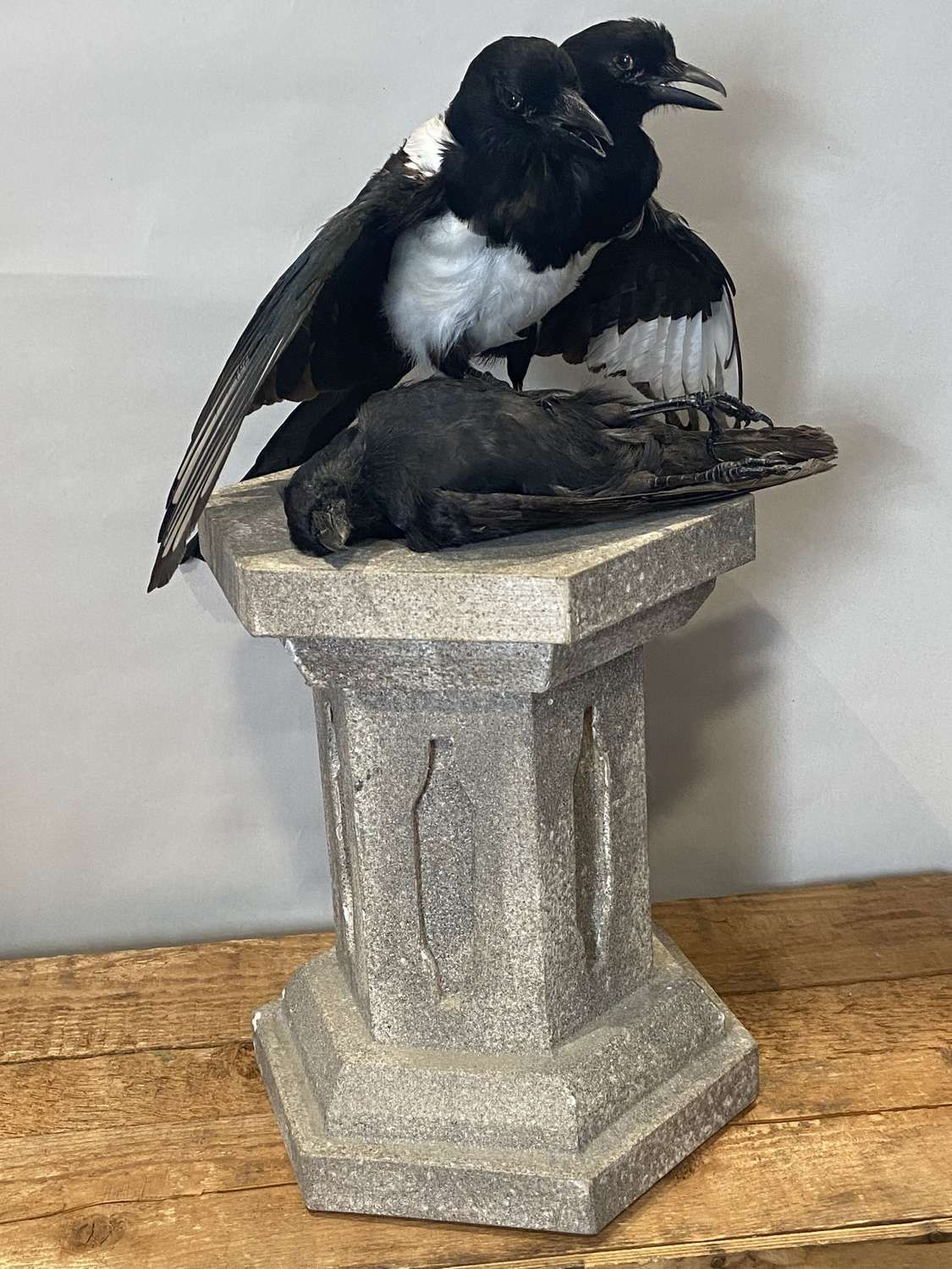 Antique Taxidermy Two Headed Lucky Magpie & Prey Mounted On Pillar