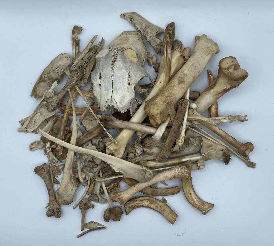 Joblot Of Mixed Taxidermy Cattle Sheep Bones & Deer Skull Cap